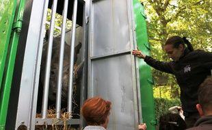 Le départ des rhinocéros du zoo de Lille.