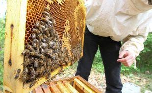 Colomiers, le 21 avril 2013. Un apiculteur au travail sur l'une de ses ruches.