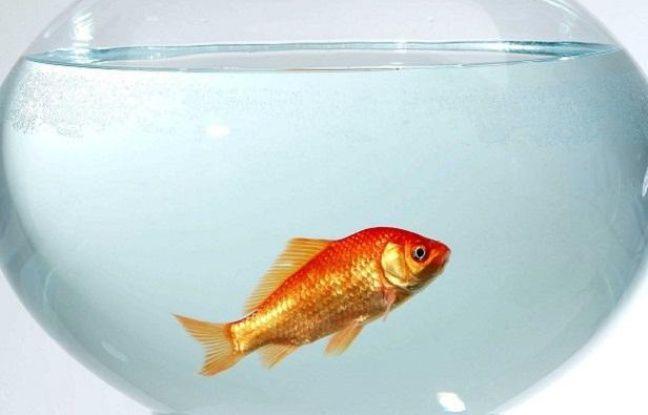 les poissons d 39 aquarium sont ils heureux. Black Bedroom Furniture Sets. Home Design Ideas