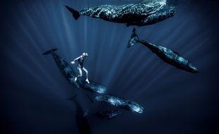 L'apnéiste a rencontré des cachalots