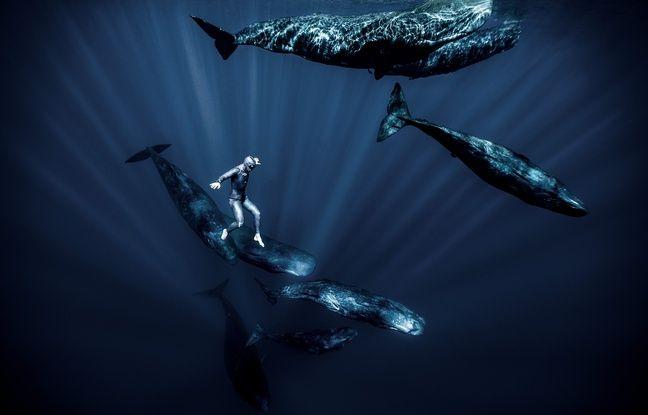 VIDEO. Un tour du monde des océans en «une seule apnée», Guillaume Néry dévoile son nouveau film