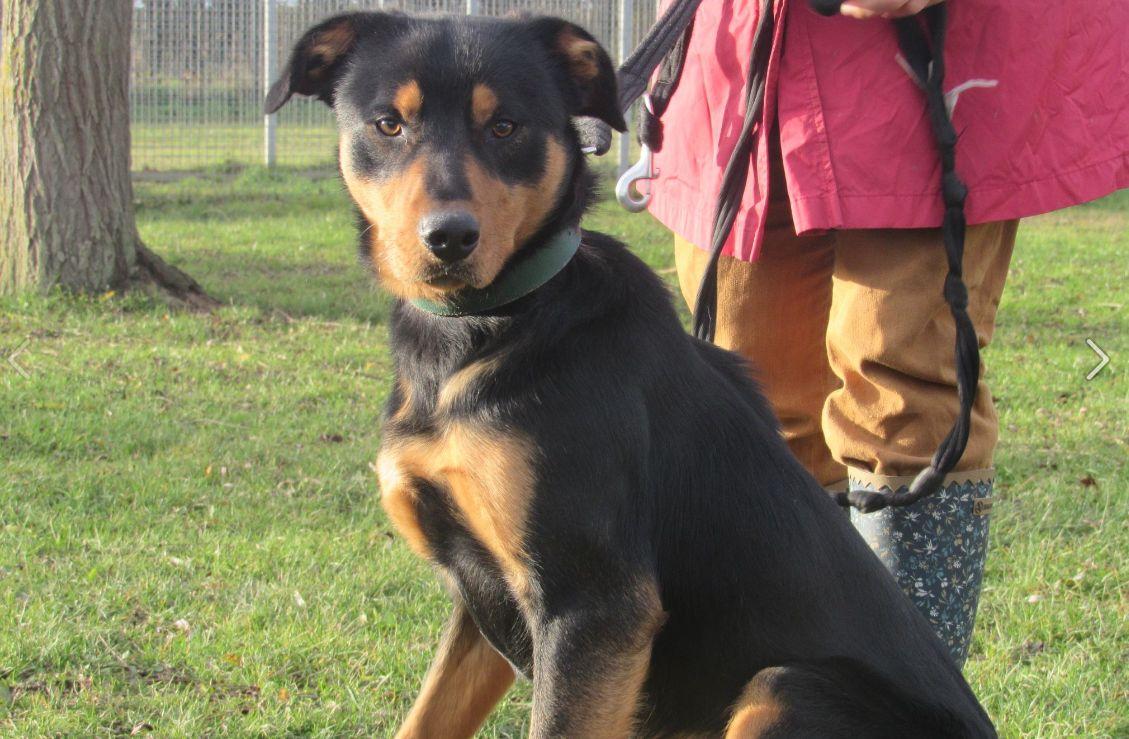 Un chien poignardé dans un refuge de la SPA, près de Caen