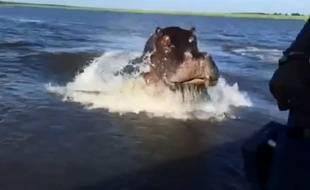 Un hippopotame surprend un bateau de touristes