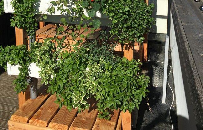 Des pergolas végétalisées sont proposées à des entreprises et promoteurs de la métropole bordelaise.
