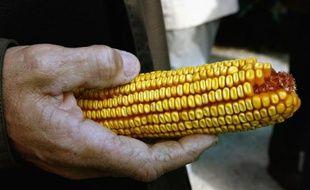 La Russie a suspendu l'importation de maïs génétiquement modifiés commercialisés par le géant américain de l'agroalimentaire Monsanto après la publication d'une étude choc sur la toxicité d'un de ses maïs génétiquement modifiés.