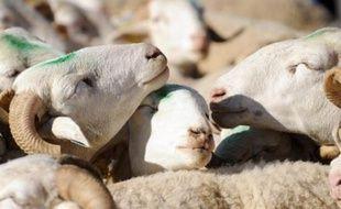 Jusqu'ici interdites dans les zones exemptes de la maladie de la langue bleue (fièvre catarrhale), les vaccinations à titre préventif des bovins, ovins et caprins devraient pouvoir être autorisées l'an prochain dans toute l'UE, a proposé lundi la Commission européenne.
