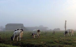 Illustration d'une ferme et de vaches ici non loin de Rennes, en Ille-et-Vilaine.