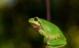 Des robots conçus à partir de cellules de grenouilles viennent d'être conçus