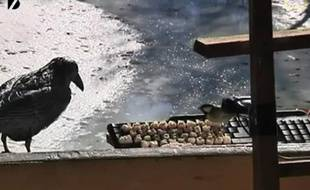 Capture d'écran de la vidéo diffusée en direct sur le site de www.birdsontwitter.com.