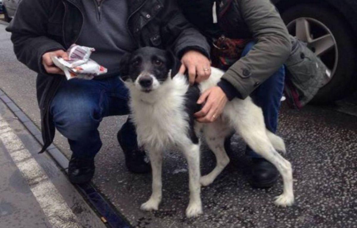 Le petit chien a été découvert agonisant, attaché à un radiateur – Capture d'écran Twitter