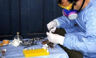 Un scientifique spécialisé dissèque un rat dans le centre du Nigeria, après la propagation d'un foyer de fièvre de Lassa.