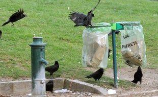 Des corbeaux font les poubelles pour se nourrir à Paris.