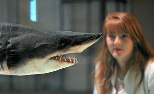 Un requin Mako conservé au musée océanographique.