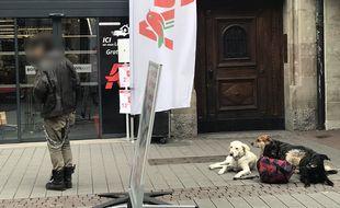 Les SDF ont-ils besoin d'une éducation canine à Strasbourg?