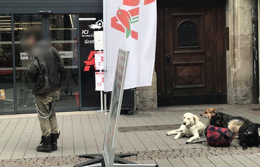 Strasbourg: Après l'arrêté anti-mendicité, une charte pour les chiens de SDF?