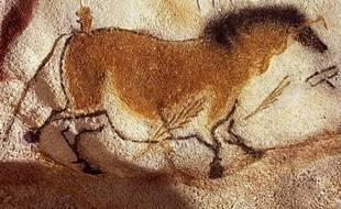 """Une équipe internationale de chercheurs a annoncé lundi avoir découvert la preuve que les """"chevaux ponctués"""", représentés avec des """"taches"""" sur leur robe par les artistes de la préhistoire, existaient bel et bien à l'époque et n'étaient pas un produit de leur imagination."""