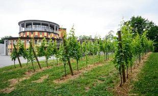Vue générale le 19 juin 2015 de la cave Puklavec and Friends et de ses vignes à Ormoz, en Slovénie