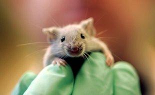 Une solution saline a été injectée dans le cœur de la souris,