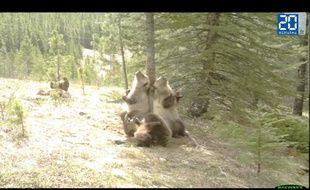 une ours party dans les bois
