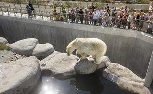 Un ours polaire au zoo de Copenhague au Danemark, le 23 juillet 2014