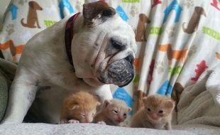 Un chien et des chatons.