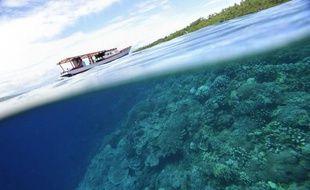 Pêche au cyanure et réchauffement des eaux: les coraux de la baie indonésienne de Pemuteran étaient condamnés, jusqu'à ce qu'une plongeuse sous-marine les branche sur du courant électrique. Aujourd'hui, le récif est florissant et la méthode est copiée de par le monde.