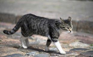 Illustration d'un chat marchant dans une rue.