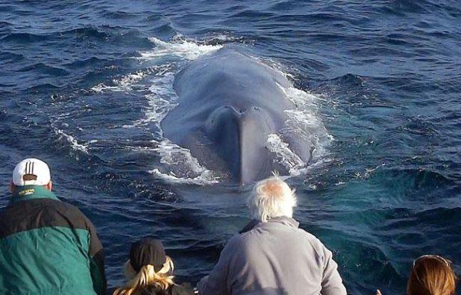Des touristes observent une baleine bleue en Californie, le 21 octobre 2011.