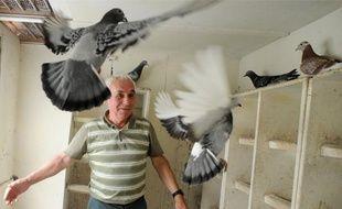 Les pigeons de Louis Lelay, un Nantais de 73 ans, reviennent ce midi de Dinan.