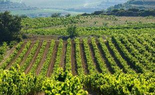 Vue générale des vignobles de La Rioja à Samaniego, dans le nord de l'Espagne le 23 juillet 2014
