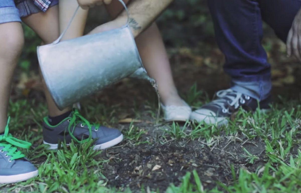Une fois lu, planté et arrosé, le livre redeviendra un arbre. – YouTube