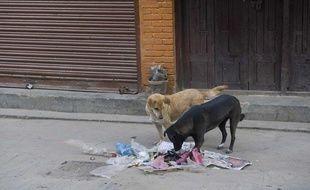 Illustration de chiens errants