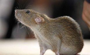 Une étude, publiée le 19 septembre 2012, montre que les rats nourris avec un maïs OGM meurent plus jeunes et développent plus de cancers