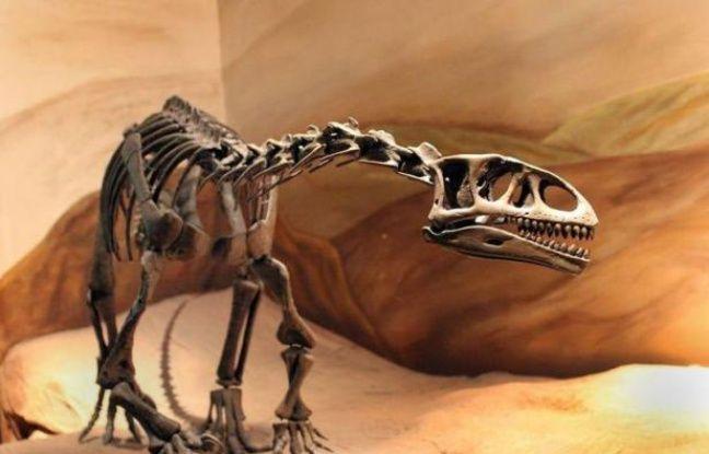 De petites empreintes et des embryons fossiles ont été découverts sur l'un des plus anciens sites de nidification de dinosaures révélant de nouveaux détails sur l'existence de ces créatures majestueuses, selon une étude publiée lundi aux Etats-Unis.
