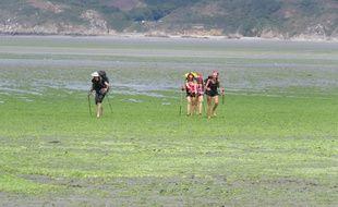 Des randonneuses traversent l'anse de Morieux-Hillion, sur la plage de Bon-Abri : une promenade risquée en raison des possibles inhalations du H2S libéré par les algues vertes.