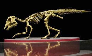 Extrêmement rare, est également exposé le squelette d'un bébé dinosaure, Hypacrosaurus, retrouvé intact au Canada.