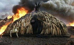 Des tonnes d'ivoire incinérées le 30 avril 2016 dans le parc national de Nairobi