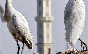 Une Egyptienne de 25 ans est décédée des suites du virus H5N1 de la grippe aviaire, portant à 17 le nombre de personnes y ayant succombé en Egypte, a annoncé dimanche le ministère de la Santé.