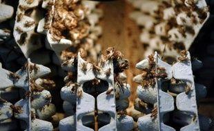 """Et l'entomophagie, la consommation d'insectes par l'être humain, est """"un marché qui a vocation à exploser""""."""