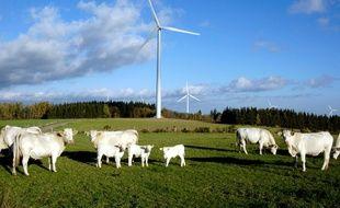 Des bovins au pied d'éoliennes, en Haute-Loire (illustration)
