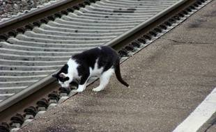 Un chat près des rails d'un chemin de fer (illustration).