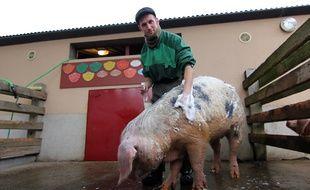 Aurélien, soigneur à l'Ecomusée de Rennes, douche Iroise, porc de Bayeux.