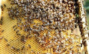 Le recours aux abeilles, de plus en plus nombreuses en zone urbaine avec des ruches installées sur des toits d'opéras ou au pied des immeubles, est développé comme un moyen d'évaluation de la pollution, faisant d'elles de véritables sentinelles de l'environnement.
