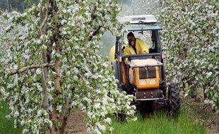 Un arboriculteur traite ses pommiers en fleurs le 9 avril 2008 à Lamanon, dans les Bouches-du-Rhône.