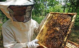 Un an après le lancement d'un plan de soutien à l'apiculture, la production française de miel a encore baissé en 2013, les professionnels accusant de nouveau certains pesticides mais aussi le mauvais temps.