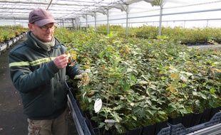 Olivier Forestier, directeur de la pépinière de l'ONF, observe des plants de chênes pubescents, une espèce qui sera de  plus en plus à l'aise dans la moitié ouest de la France.