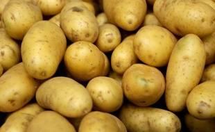 Des patates récoltées dans le nord de la France