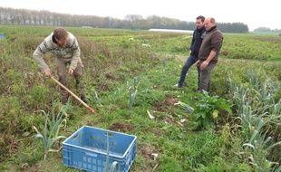 Les agriculteurs de l'association «La voix des champs bio des Weppes» ont commencé à travailler à Wavrin, près de Lille.