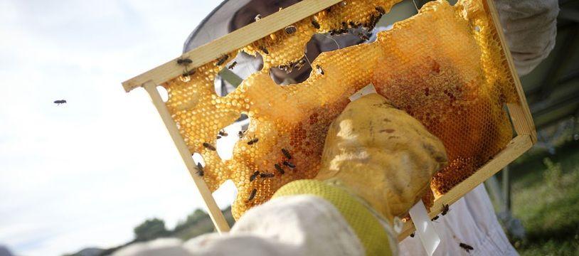 Apicluster, association basée à Aix-en-Provence, installe des ruches en entreprise