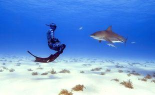 En apnée, les aventuriers de Lords of the Ocean ont pu approcher au plus près des requins.
